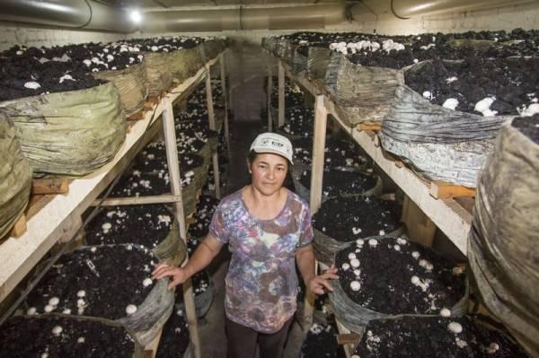 Carmem Aparecida Maoski Montanarim, produtora de cogumelos paris. Tijucas do Sul, 03/07/2015. Foto: Pedro Ribas/ANPr