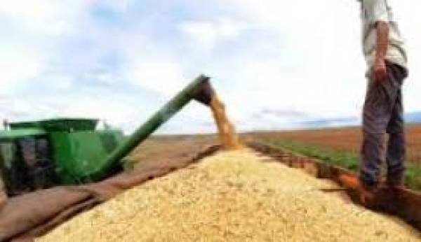 A agricultura foi o setor que teve maior retração no trimestre. Foto: Arquivo/Agência Brasil
