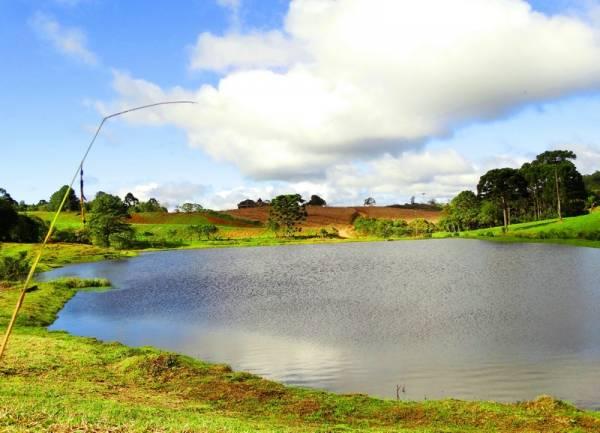 A programação inclui palestras, atividades de educação ambiental e o lançamento de um novo projeto em São José dos Pinhais (Foto: Edison Renato/PMSJP)