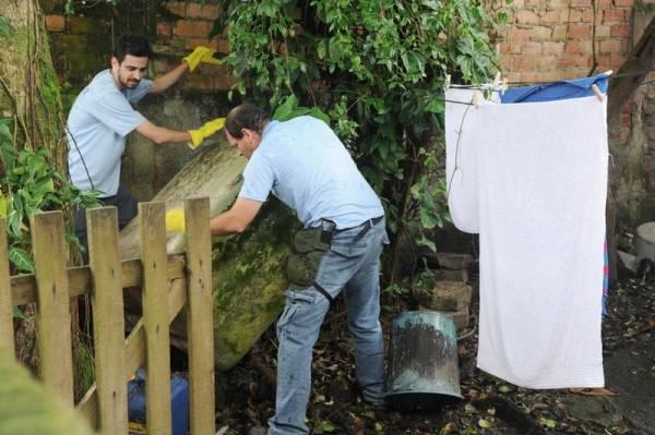 É preciso que os quintais sejam limpos todas as semanas para evitar acúmulo de lixo que possa juntar água. Vasos de plantas também podem conter ovos ou larvas de mosquitos. Foto: Divulgação/ANPr
