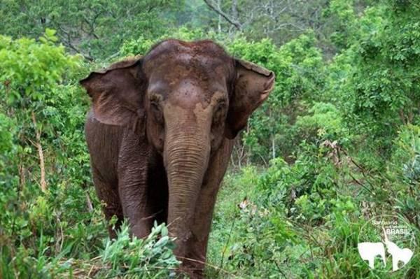 Divulgação/Santuário de Elefantes Brasil