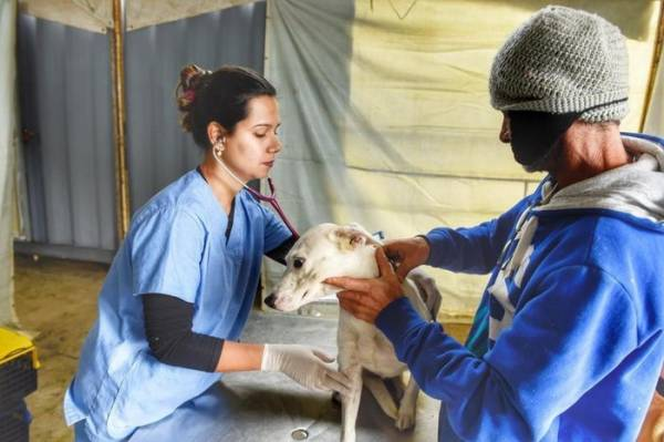 No Paraná, 15 mil animais domésticos serão castrados. Foto: Denis Ferreira Netto/SEDEST